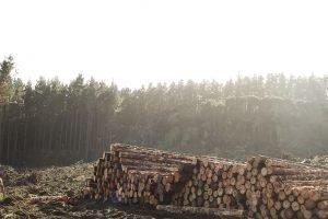 Tombelson Logging stack of logs